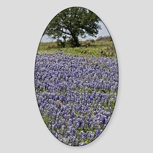 BlueBonnetsAndTree Sticker (Oval)
