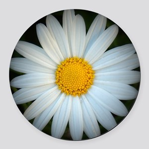 Standout Daisy  Round Car Magnet