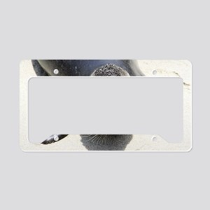 seal1 License Plate Holder