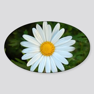 White Daisy Sticker (Oval)