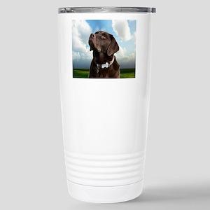 labrador dog look forward to love peace joy c Trav