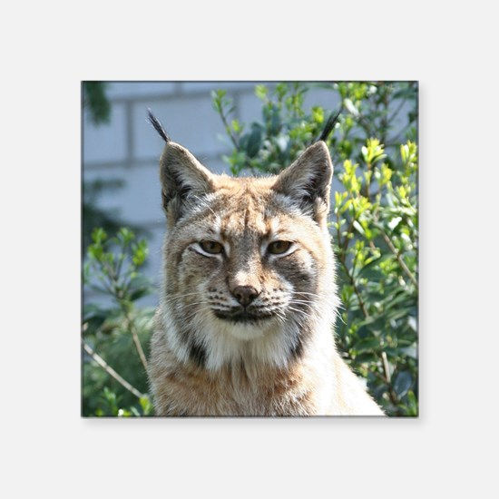 "Lynx001 Square Sticker 3"" x 3"""