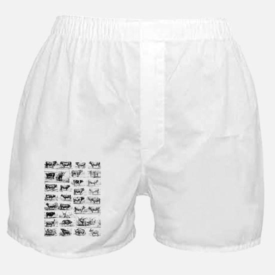 cows II Boxer Shorts