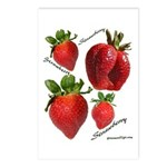 Strawberries Postcards (Package of 8)