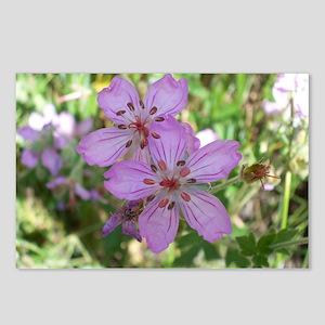 Colorado Wildflower, Natu Postcards (Package of 8)