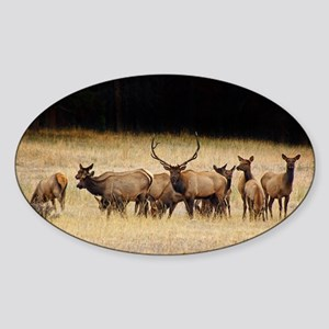 Elk 9x12 Sticker (Oval)