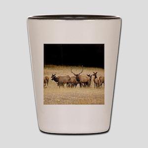 Elk 9x12 Shot Glass