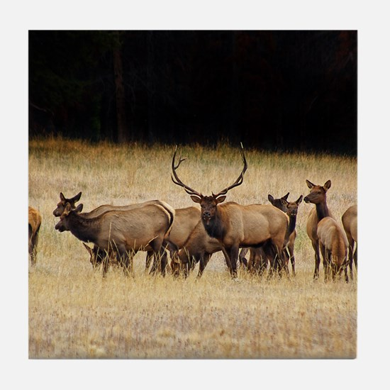 Elk 9x12 Tile Coaster