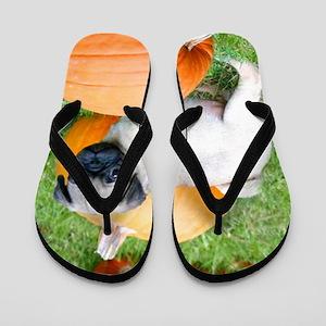 Pug in pumpkins b Flip Flops