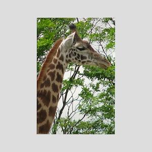 giraffe 2010 Rectangle Magnet