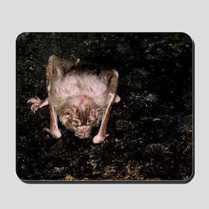 Vampire Bat 4394 for Greeting Cards Mousepad
