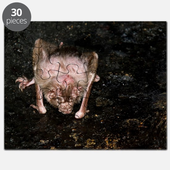 Vampire Bat 4394 for Greeting Cards Puzzle