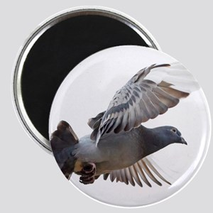 pigeon fly to love joy peace Magnets