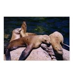 Sea Lion Postcards (Package of 8)