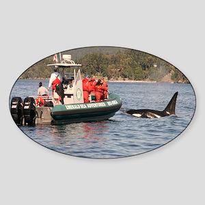 orca Sticker (Oval)