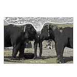 Elephant Eyes Woodcut Postcards (Package of 8)