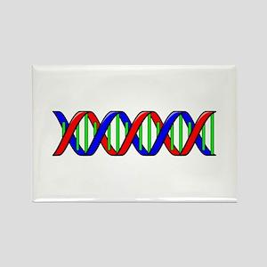 DNA Strand Magnets