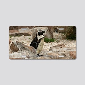 South African Penguin I Aluminum License Plate