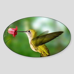 Hummingbird in flight Sticker (Oval)