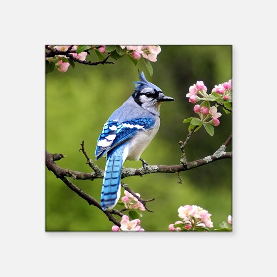 "Blue Jay Square Sticker 3"" x 3"""