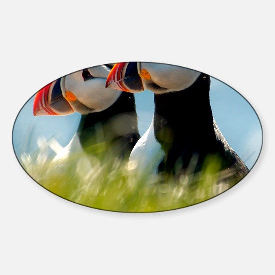 Puffin Pair 14x14 600 dpi Sticker (Oval)