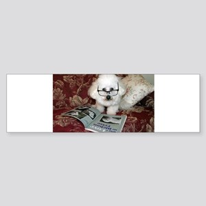 You just Gotta Love a Bichon Bumper Sticker