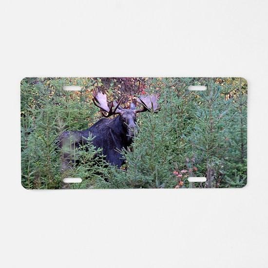 14x6_print    5 Aluminum License Plate