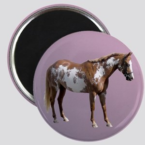Pinto horse Magnets