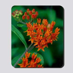 Butterfly Weed Mousepad