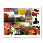 Colorful Autumn Photo Collage by Celeste Sheffey S