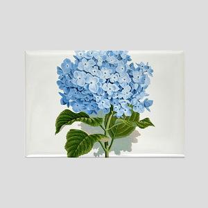 Blue hydrangea flowers Magnets