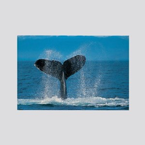 whale wide Rectangle Magnet