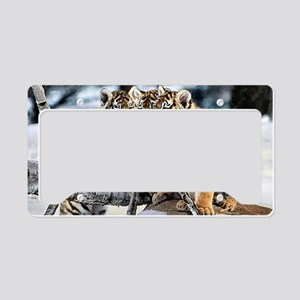 Tiger Cubs in the Snow License Plate Holder