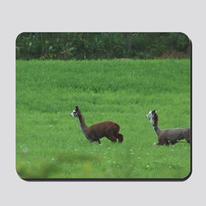 alpacas Mousepad