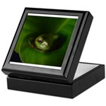 Lazy Frog Keepsake Box