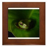 Lazy Frog Framed Tile