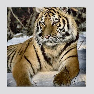 siberian tiger art Tile Coaster