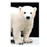 Polar Bear Cub Postcards (Package of 8)