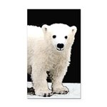 Polar Bear Cub Rectangle Car Magnet