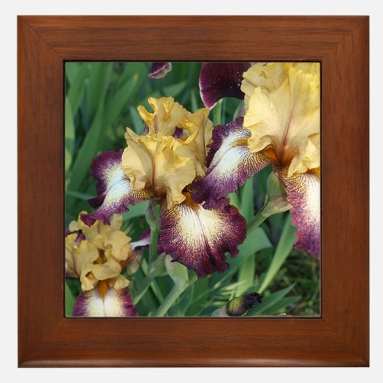 Gold and Purple Irises Framed Tile