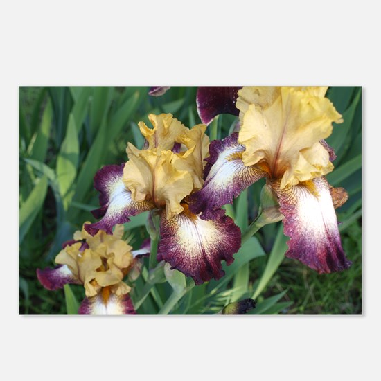 Gold and Purple Irises Postcards (Package of 8)