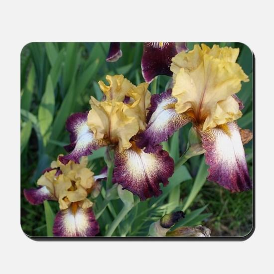 Gold and Purple Irises Mousepad