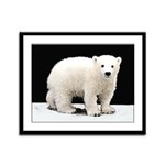 Polar Bear Cub Framed Panel Print