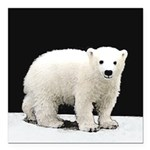 Polar Bear Cub Square Car Magnet 3