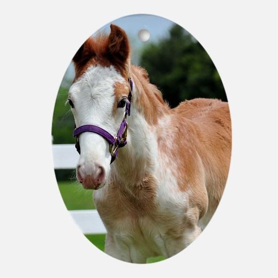 roan_foal_card Oval Ornament