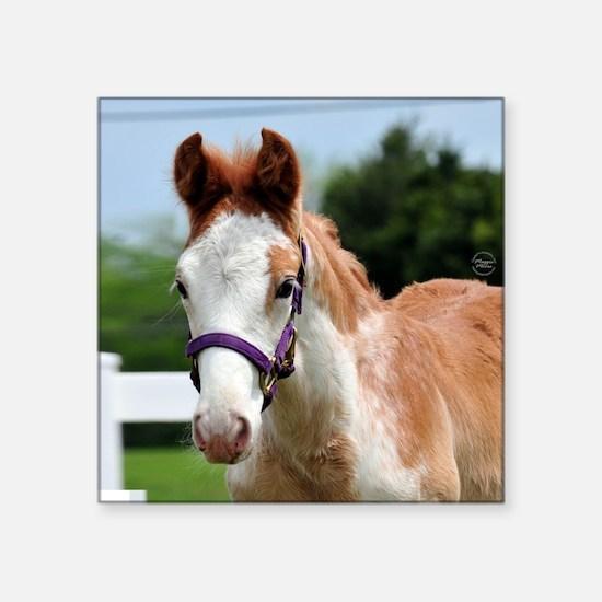 "roan_foal_rnd Square Sticker 3"" x 3"""