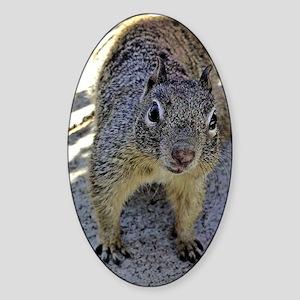 squirrel_journal Sticker (Oval)