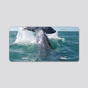 IMG_9023 Aluminum License Plate