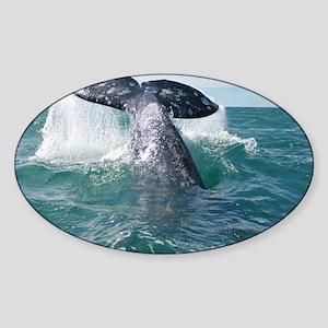 IMG_9023 Sticker (Oval)