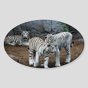 tiger2 Sticker (Oval)